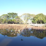ハス池 なんとも綺麗でした。(周辺)